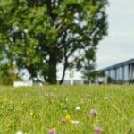 Trossinger Sommerakademie: Fokus Schweiz
