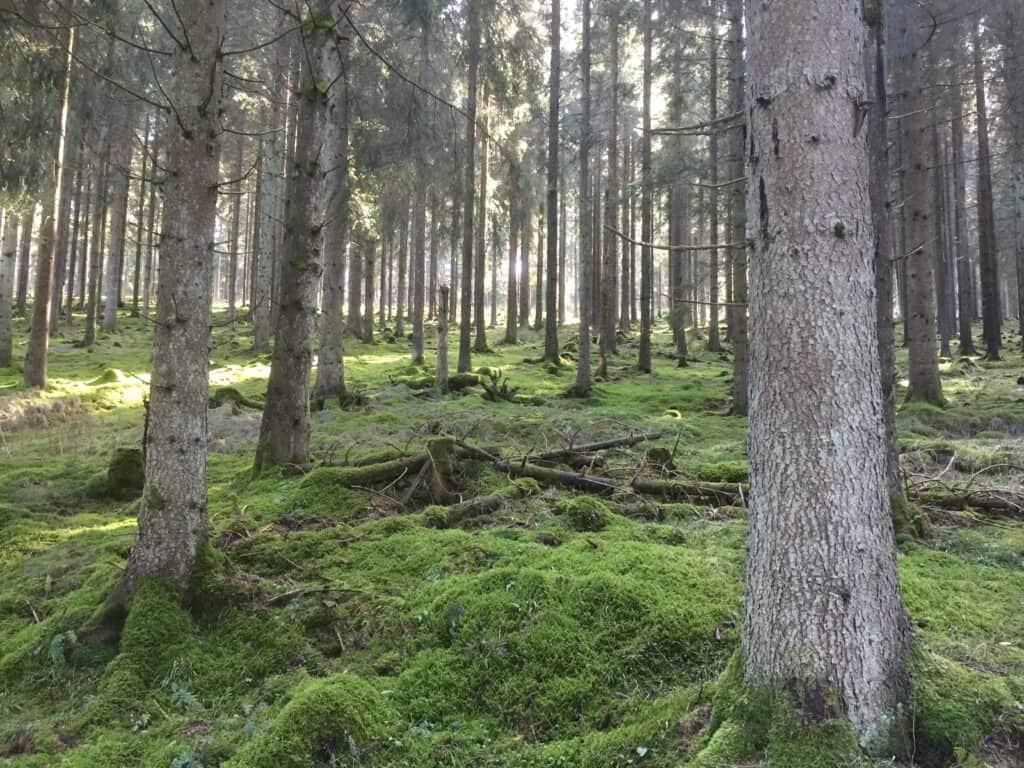 Üben im Wald